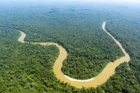 Å skrive ut hele Internett, inkludert den mørke delen, ville gjort et merkbart innhugg i regnskogen.