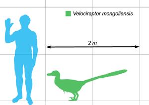 Velociraptor sammenlignet med menneske.