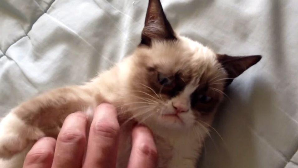 Grumpy Cat er etterhvert blitt et av ikonene innen kattevideoverdenen.