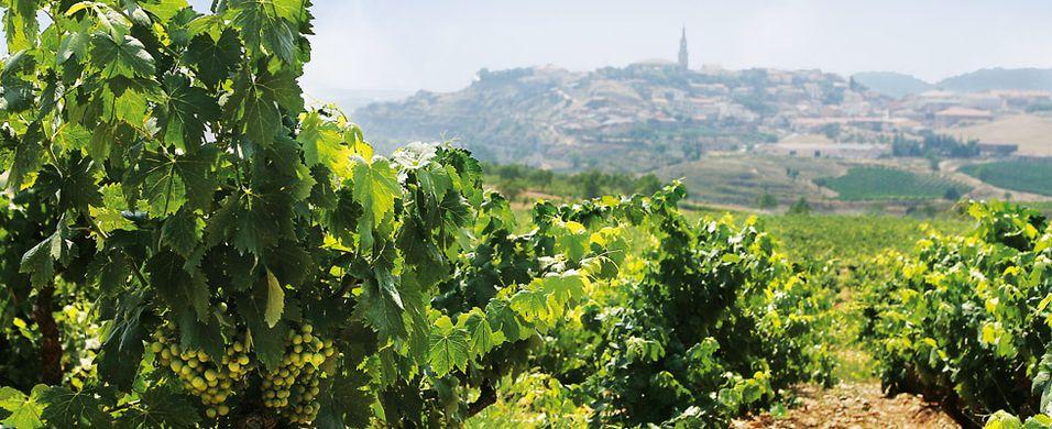 Test av Rioja 2010-årgangen - Crianza