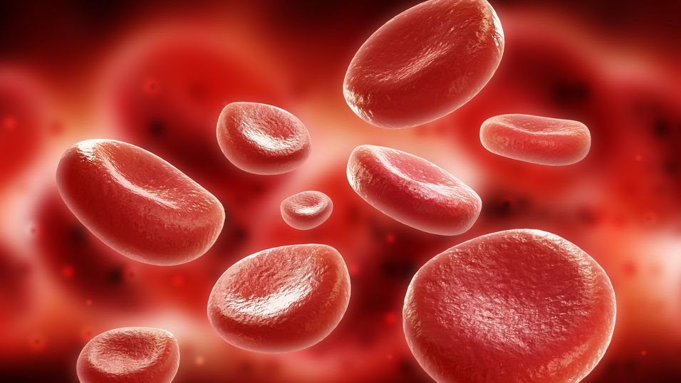 Vil teste kunstig blod på mennesker
