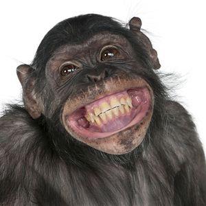 I eksperimentet ble det benyttet apekatter og rotter, men det skal også bli mulig å bruke teknologien på mennesker.