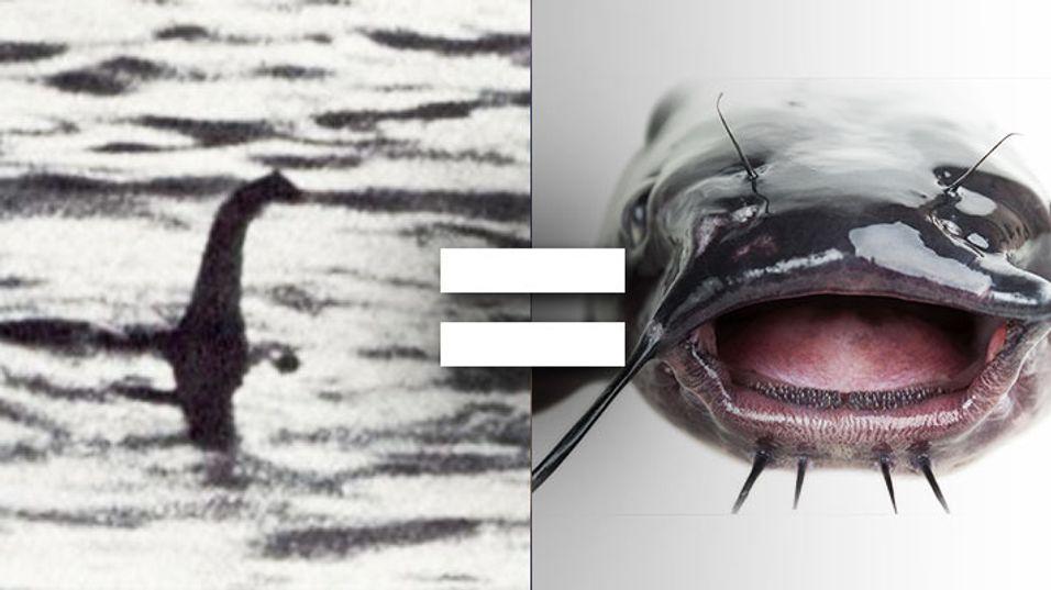 – Loch Ness-monsteret er sannsynligvis en stor fisk