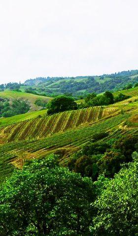 Cerise er en av vinmarkene som gir druer til denne vinen.
