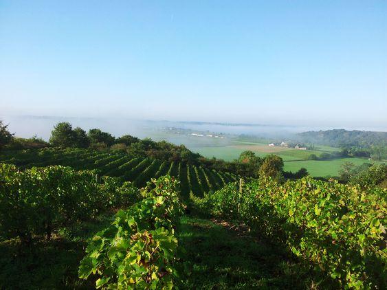 Fra Patrick Baudouins vinmarker.