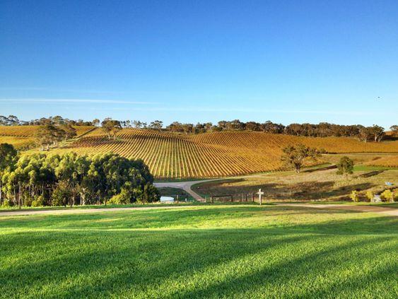 Vinmarker i Adelaide Hills.