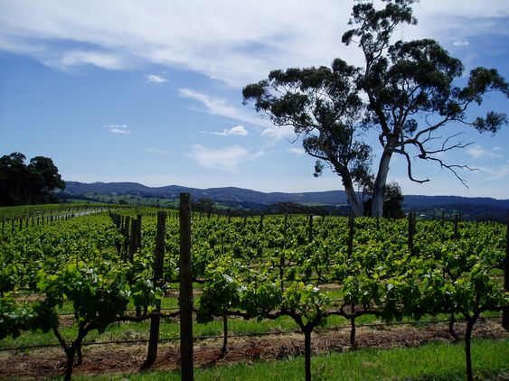 Adelaide Hills.