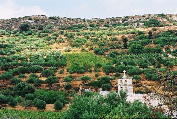 Fra dette landskapet på Kreta kommer den ene vinen.