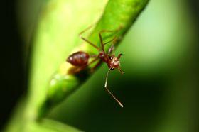Maur er visst lettere å lure enn vi trodde. Eller?