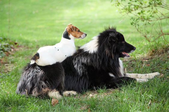 Bourmault-familiens hunder trives også i Avize.