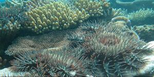 Nam, nam, korallrev!