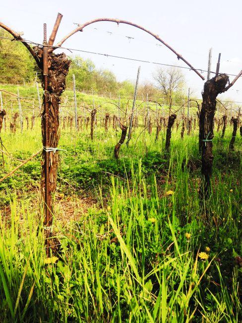 Vinmarkene skiller seg ut fra resten av Franciacorta.