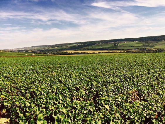 Fra Coutelas' vinmarker i Vallee de la Marne .
