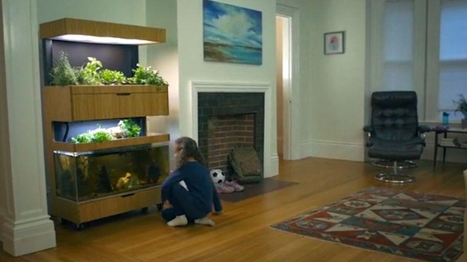 Med Grove Ecosystem kan du få en kjøkkenhage i stua
