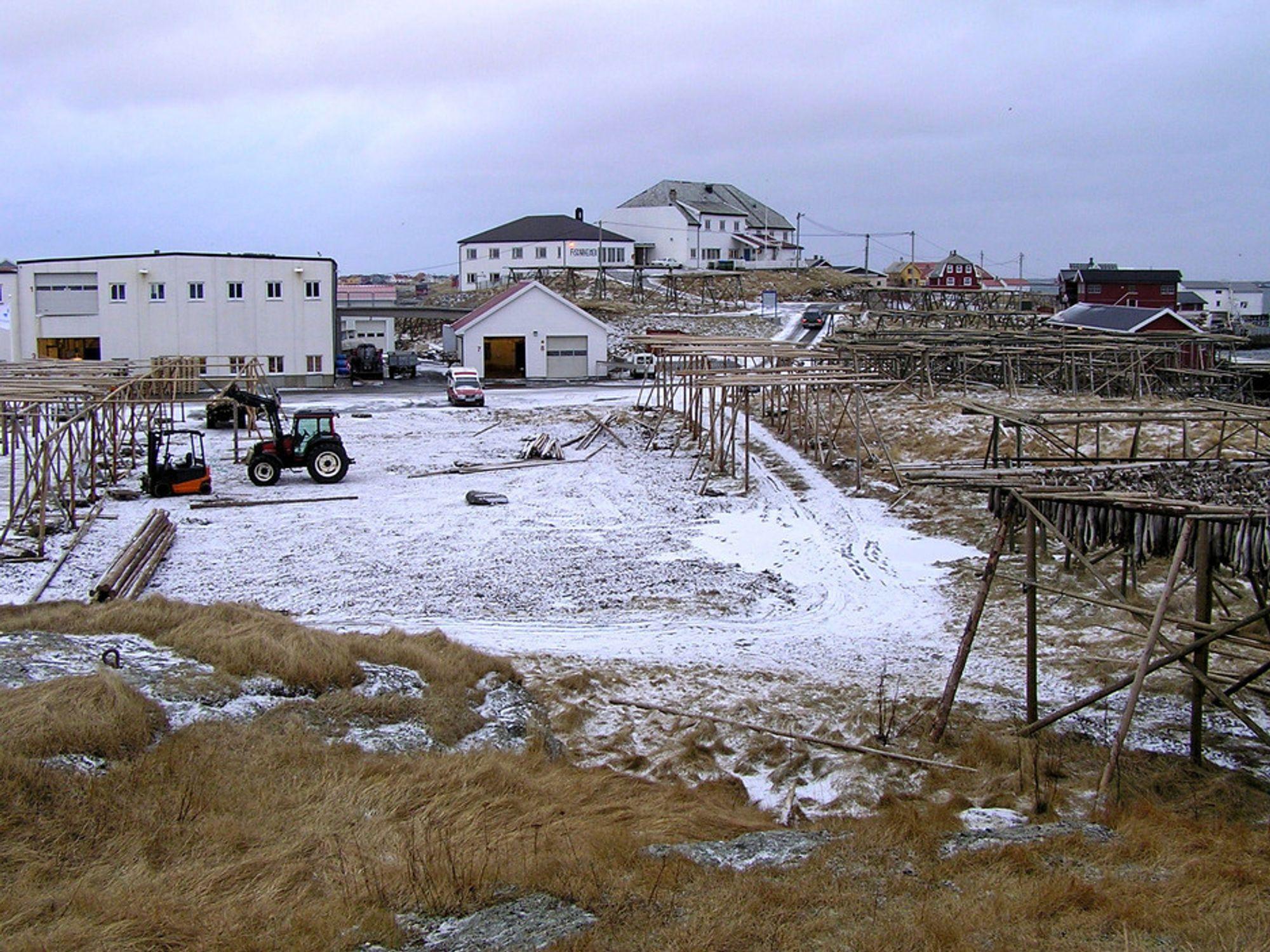 Oppstillingsplassen til det nye fergeleiet på Røst vil ligge til høyre på bildet. Atskillige kvadratmeter med tomt som i dag okkuperes av fiskehjeller må innløses for å gi plass til oppstillingsplassen. (Foto: Statens Vegvesen)