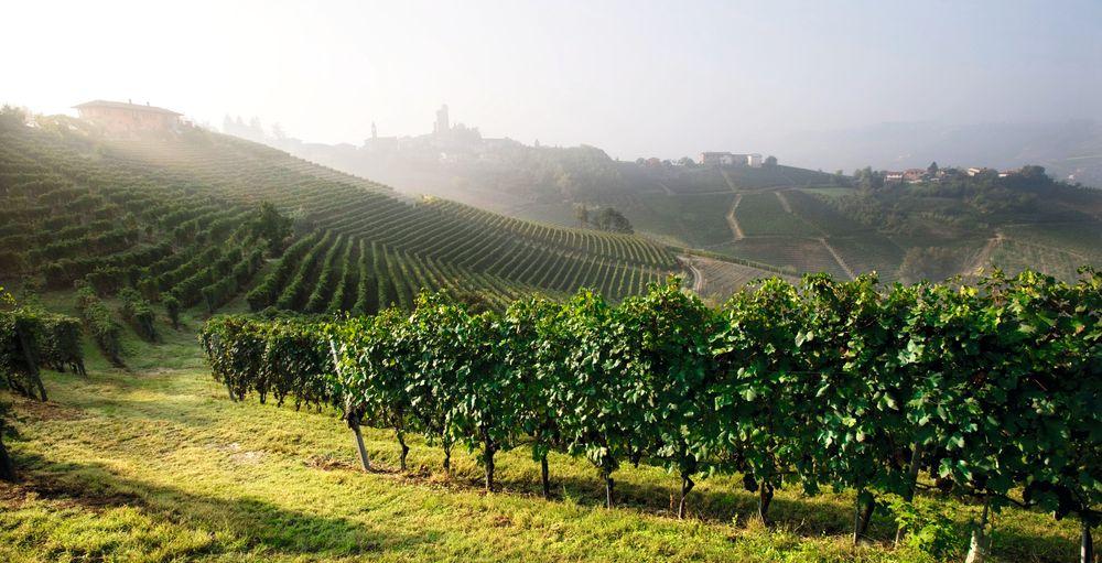 Fra Ravera-vinmarken til Vietti i Novello.