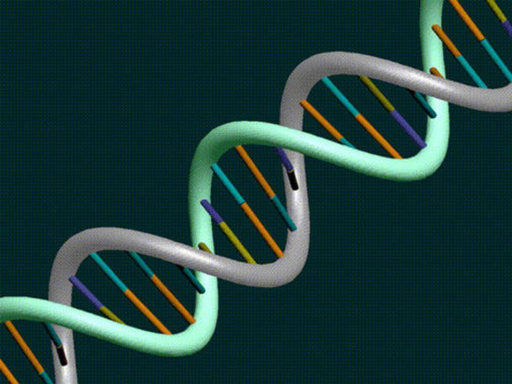 DNA-«maskin» regner kvadratrøtter