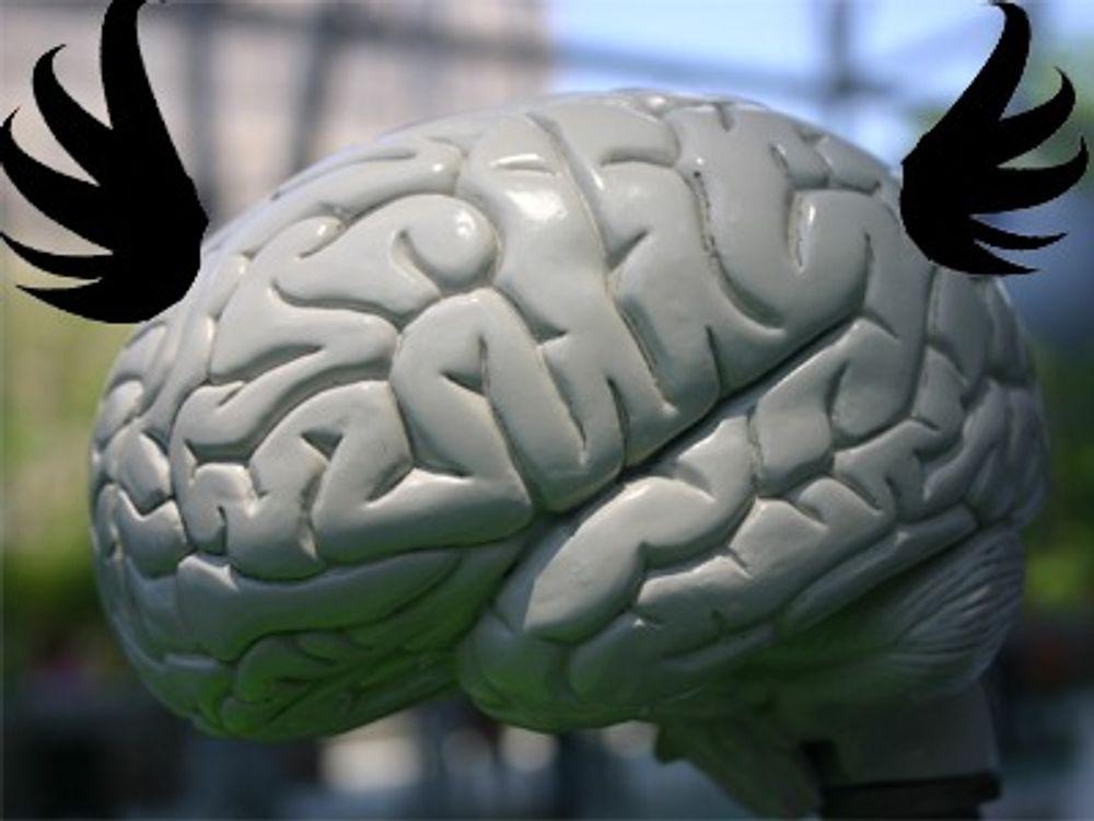 - Søk avlaster hjernen din