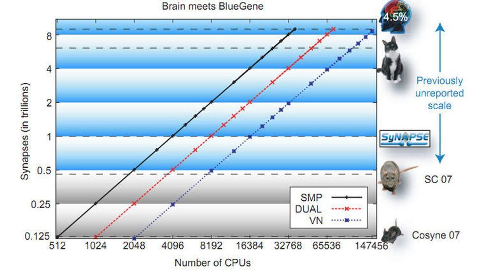 Antallet prosessorer som behøves for å simulere hele eller deler av hjernen til mus, rotte, katt og menneske.