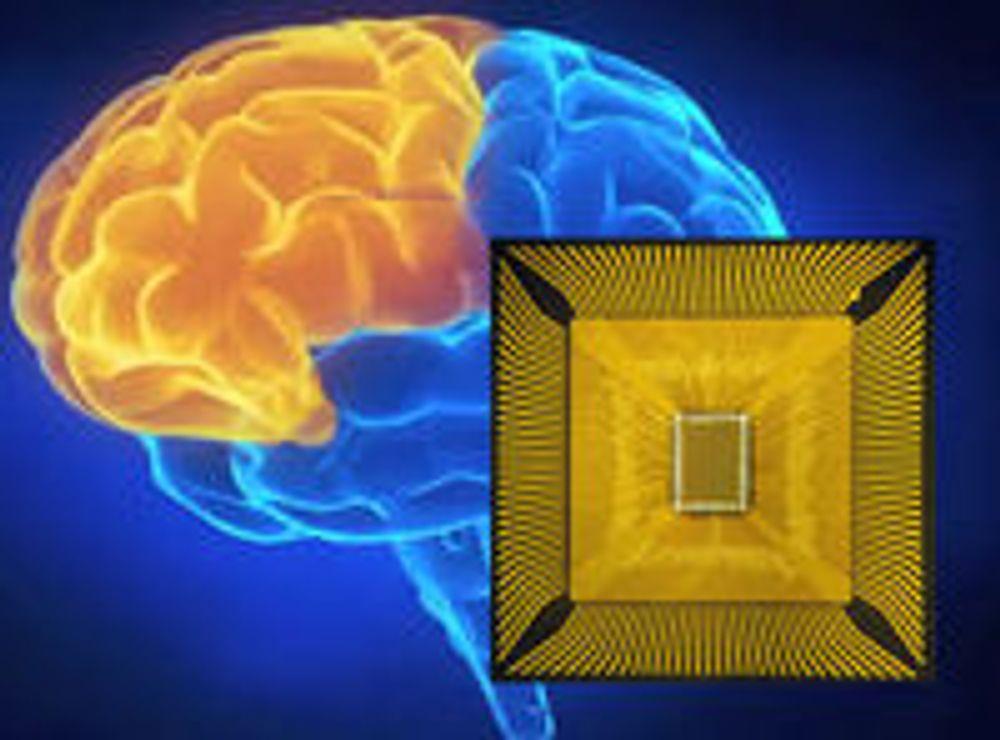 IBMs første prosessorkjerner for kognitiv databehandling omfatter 256 nevroner og noen titusener synapser, etter modell av hjernen.