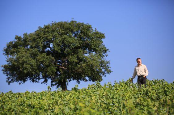 Domininque Piron i vinmarken.
