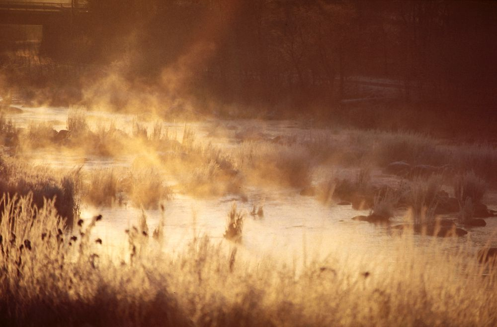Staten vil restaurere myrområder slik at de kan fange mer karbon.