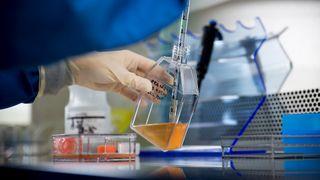 Jakten på kreftkuren: Her er norske forskere helt i front