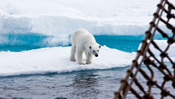 Isbjørn og annet liv må også tas hensyn til når mennesker skal operere i arktiske strøk.
