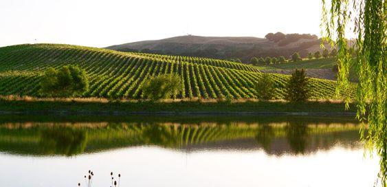 Fra en av Cline-familiens vinmarker.