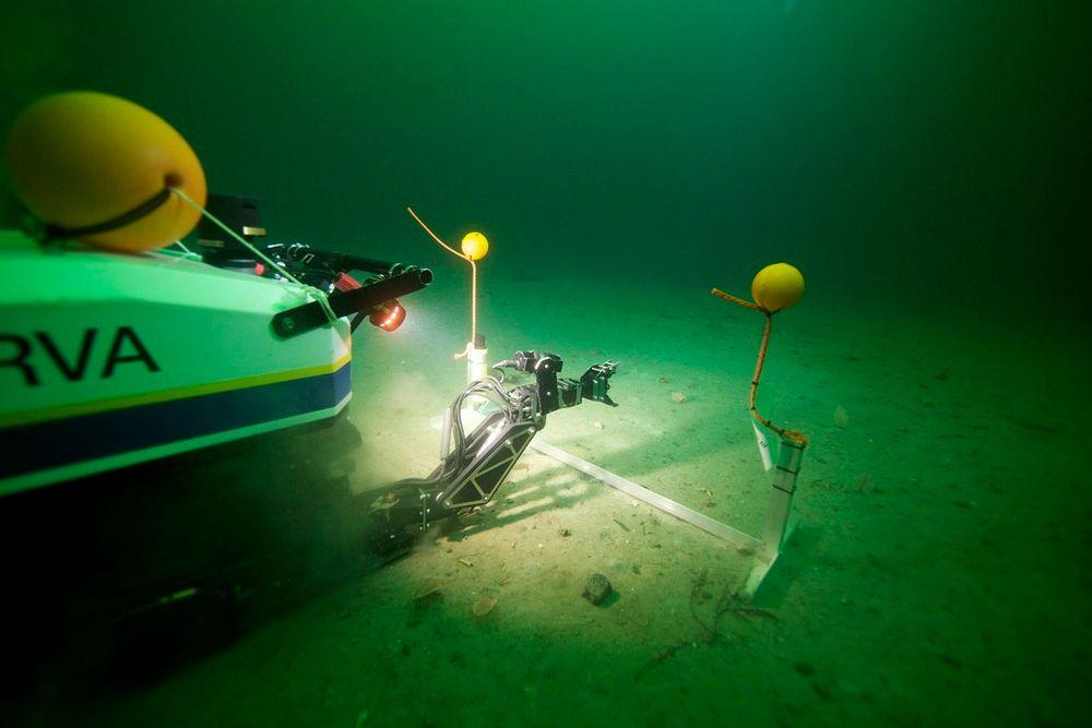 Her fra åpningsdagen av AUR-Lab hvor undervannsroboten Minerva fikk oppdraget med snorklipping – under vann.