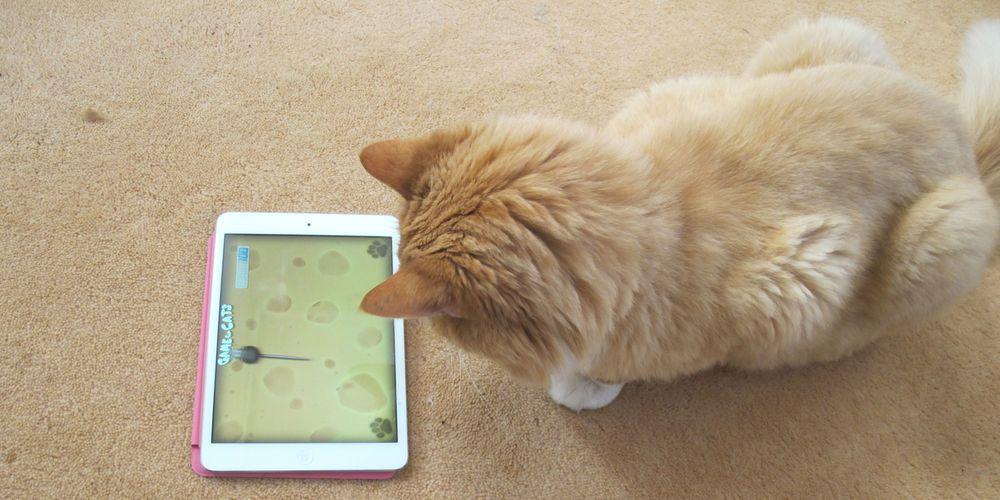 Gjør katten glad med iPad