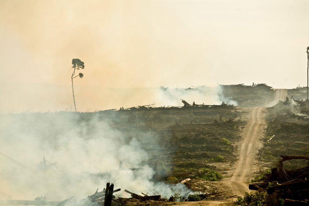 Miljøkrav. Det offentlige skal skygge unna produkter som bidrar til rasering av regnskog.