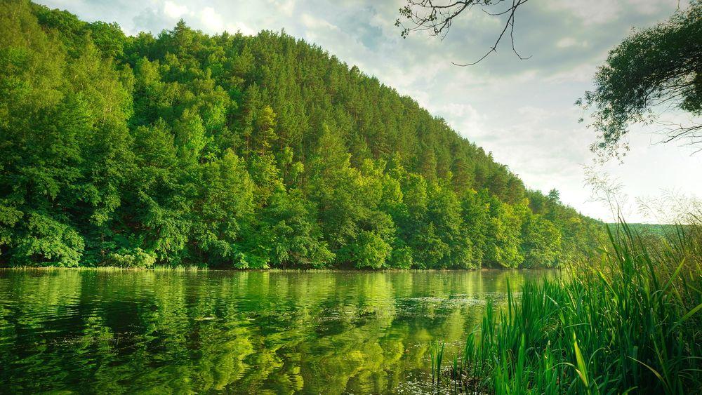 Frisk frugt FORSKNING: Langs kysten står verdifull skog og råtner. Samtidig YI43