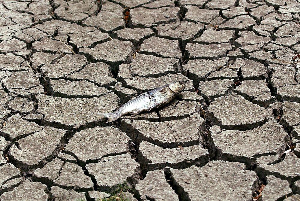 Tørken i Spania i 2005 medførte en kamp om vannet.