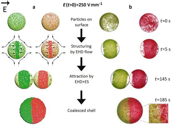 Tegning 3: Fremstilling av mosaiske kolloidosomer.