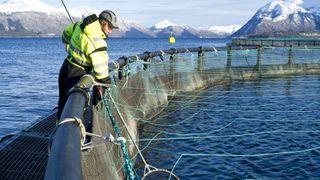 Verdens største fiskeoppdrettsselskap har 90 forskningsprosjekter gående