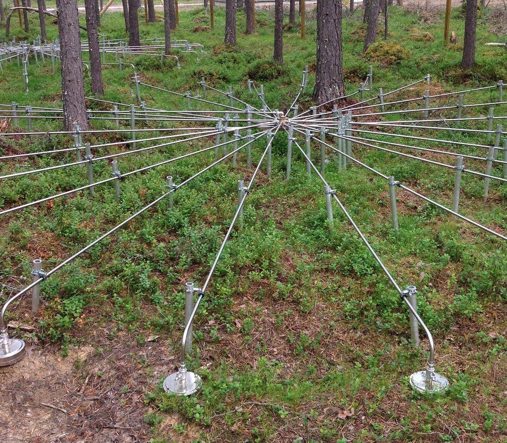 Hver mikrobarograf er koblet til fire slike rosetter som er plassert under støydempende furutrær.