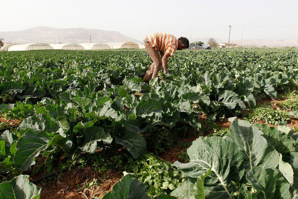 En bonde på en åker i nærheten av Jerash i Jordan tidligere denne måneden. Jordan og flere andre land i Midtøsten har vært rammet av tørke i vinter. FN frykter at matprisene på verdensmarkedene kan øke som følge av tørken.