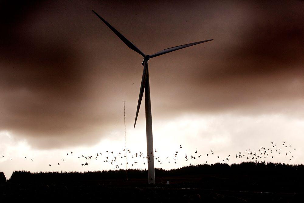 Vindturbiner omdanner bevegelsesenergien i vinden til elkraft som mates ut i kraftnettet.