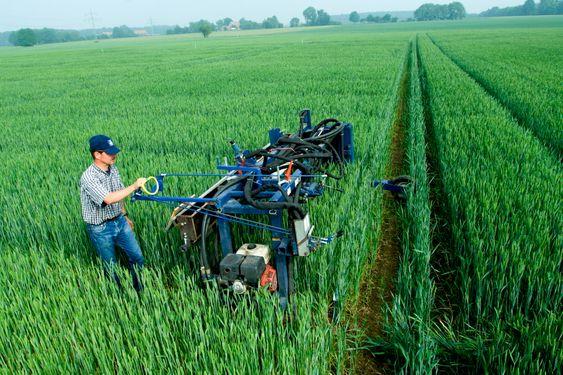 FoU: Yara tester og utvikler gjødselprodukter fortløpende. Her fra forskningsfelt i Hanninghof, Tyskland.