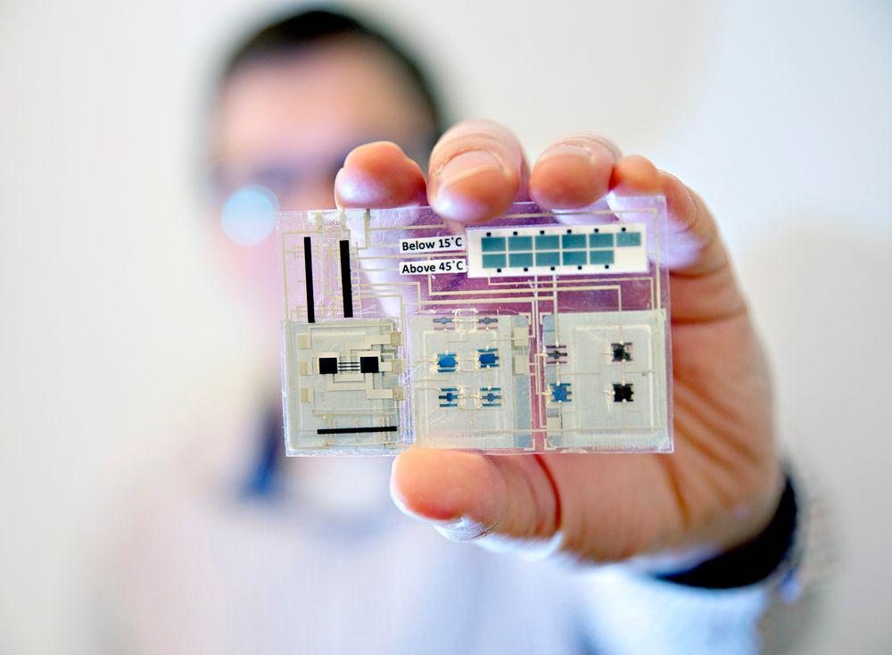 Snart klar: En prototyp på Thinfilms smarte klistremerke som måler grenseverdier for temperaturbelastning på to områder. Foto: Stefan Jerrevång