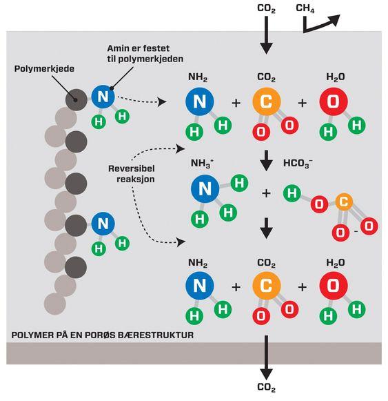 ØKT LØSELIGHET: Figuren illustrerer hvordan økt løselighet av CO2 i membranen kan oppnås. Her reagerer CO2 fra høytrykkssiden med amingruppene på polymeren og fraktes gjennom membranet med trykkfall.