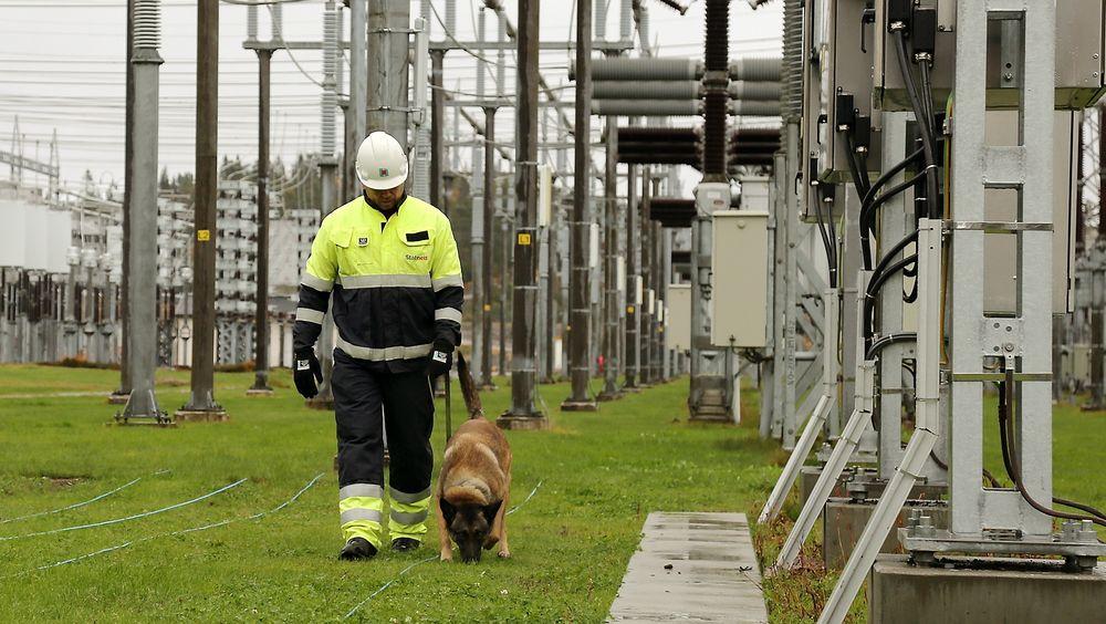 Hundehjelp: Kaptein Vegar Falsten i Forsvarets hundeskole leter etter dynamitt på Statnetts transformatorstasjon på Stølaheia utenfor Kristiansand.