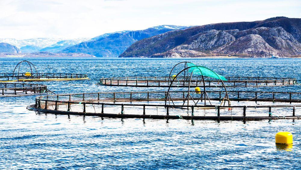 Fiskeri- og havbruksnæringens forskningsfond (FHF) kom nylig med en rapport der konklusjonen er at algeteknologien fungerer og kan oppskaleres.