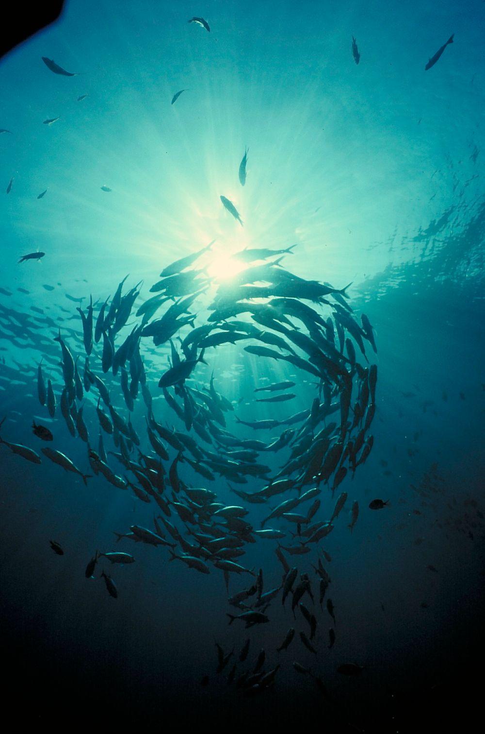 HAVROM: Ressursene fra havet dreier seg ikke bare om fisk. Regjeringen vil ha mer fokus på høsting av flere ressurser.
