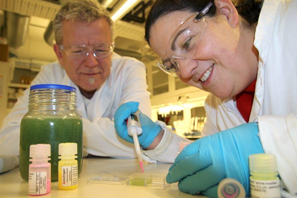 Tester: NTNU-forskerne Catherine Taylor Nordgård og Kurt I. Draget tilsetter nanokuler i slim for å se om de har klart å påvirke det til å slippe gjennom store medisinmolekyler.  Foto: Per Henning/NTNU