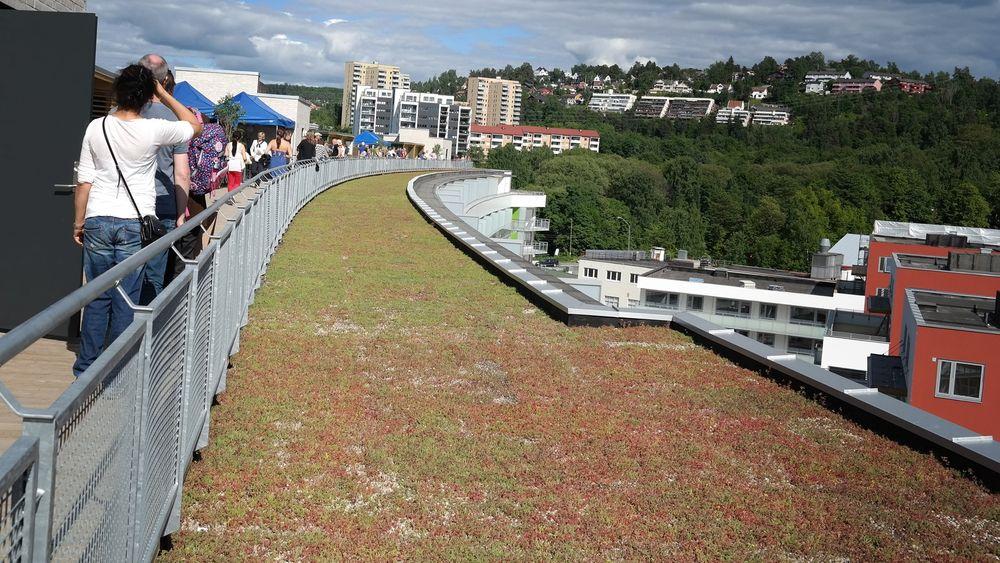 Grønne tak, som her på Dreieskiva i Kværnerbyen i Oslo, skal forsinke avrenningen og dermed bidra til bedre håndtering av overvann.