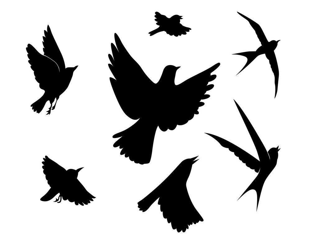 Mattenøtt: Hvor langt fløy fuglen?