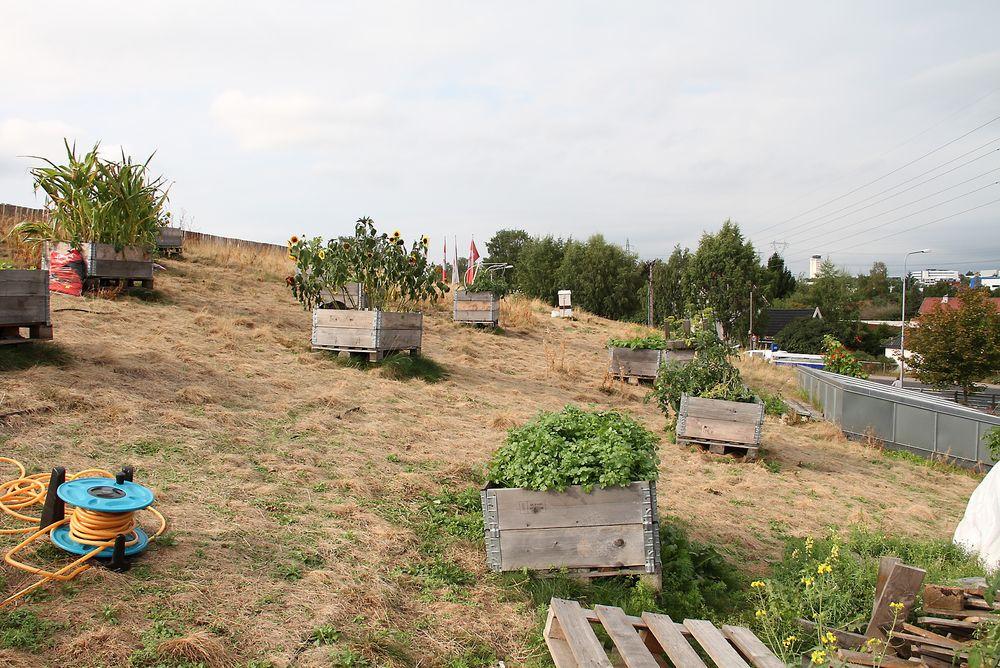 Her gror det grønnkål, tomat, bønner, solsikker og grønnkål. I tillegg er det tre bikuber som hittil i år har gitt 40 kg honning.