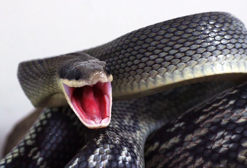 Med sitt infrarøde super-sensorsystem kan en slange «se» bølgelengder mellom fem og 30 mikrometer, med en følsomhet som gjør at den kan registrere temperaturforskjeller mindre enn 0,001 °C.